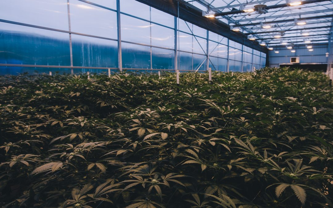 Industrial Curtains Can Be an Effective Solution in the Highly Regulated Cannabis Business